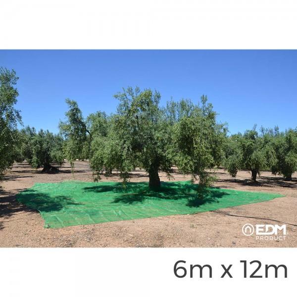 Manto para recoleccion verde aceituna 6x12m